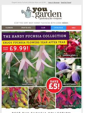 Six of the Best Hardy Fuchsias - less than £2 per plant!