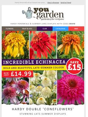 Hardy Perennials For Late Summer Colour...