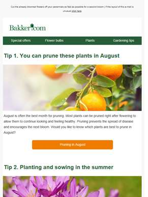 Pruning and gardening tips for August