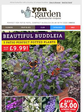 Save £5 On Buddleia 'Petite' Collection