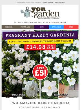 Save £5 - Hardy Gardenia For Beautiful White Flowers All Summer