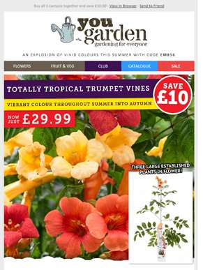 Save £10 On Campsis For Vibrant Summer Colour